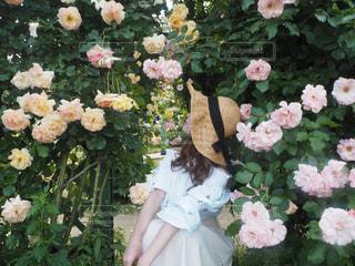 近くの花のアップの写真・画像素材[888412]