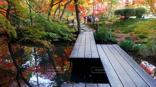 木の隣に木製のベンチの写真・画像素材[915274]