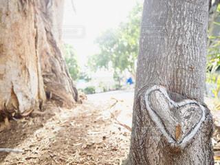 自然,木,ハート