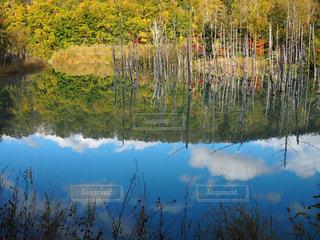 近くの水の池の写真・画像素材[1223824]