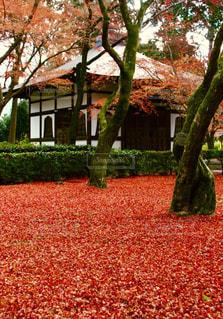 木の隣に赤い消火栓の写真・画像素材[1616402]