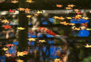 近くに池のアップの写真・画像素材[1616419]