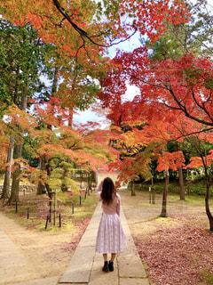 木の隣に道を歩いている人の写真・画像素材[1666883]