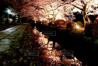 フォレスト内のツリーの写真・画像素材[1669498]