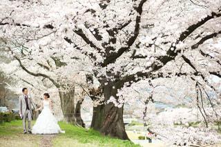 木の隣に立っている人の写真・画像素材[1675502]