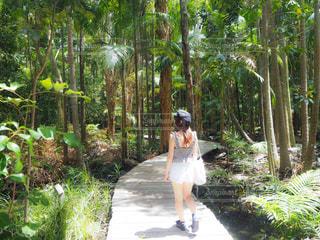 森,景色,旅行,オーストラリア,海外旅行,バイロンベイ
