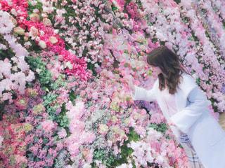 女性,ピンク,お花,壁,フォトジェニック,ファンシー,インスタ映え