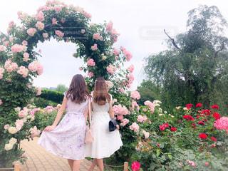 ピンクの花を見た小さな女の子の写真・画像素材[2379267]