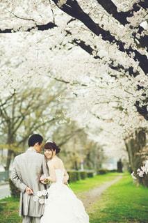 女性,花,桜,屋外,結婚式,草,夫婦,結婚式ドレス