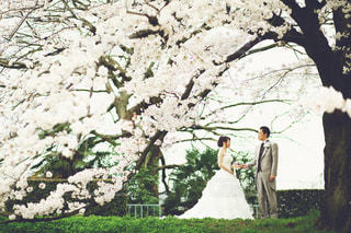 女性,花,桜,屋外,結婚式,ドレス,結婚式ドレス