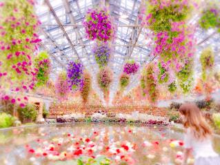 花のクローズアップの写真・画像素材[3497379]