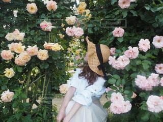 花のクローズアップの写真・画像素材[3497384]