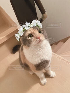 美人猫の写真・画像素材[3762575]