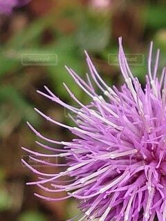 花のクローズアップの写真・画像素材[3801850]