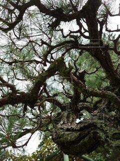 木のクローズアップの写真・画像素材[3801908]