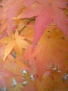 森林の写真・画像素材[3802595]
