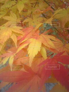 森林の写真・画像素材[3802596]