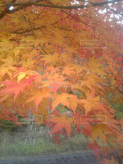 森林の写真・画像素材[3802597]
