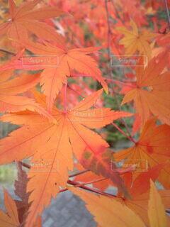 森林の写真・画像素材[3802603]