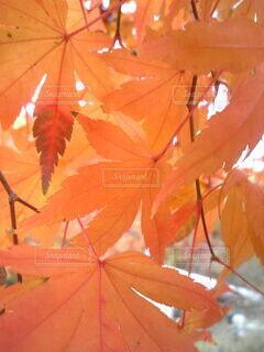 森林の写真・画像素材[3802602]