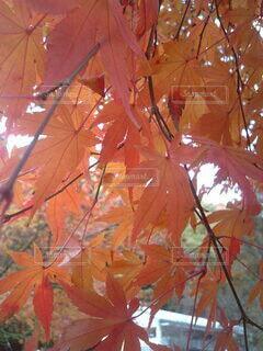 森林の写真・画像素材[3802607]