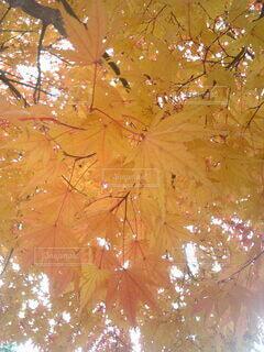 木のクローズアップの写真・画像素材[3802605]