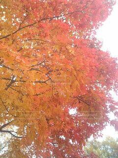 秋の気配の写真・画像素材[3802608]