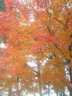 森の中の木の写真・画像素材[3802611]