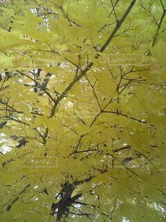 木のクローズアップの写真・画像素材[3802610]
