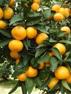 植物のクローズアップの写真・画像素材[3878332]