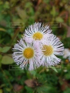 花のクローズアップの写真・画像素材[3987462]