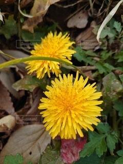 花のクローズアップの写真・画像素材[3987464]