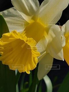 花の写真・画像素材[4306089]