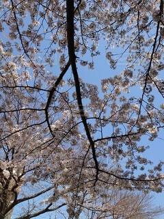 花の写真・画像素材[4306169]