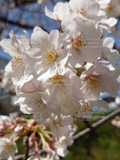 花の写真・画像素材[4306165]