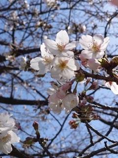 花の写真・画像素材[4306173]