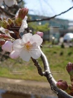 花の写真・画像素材[4306182]