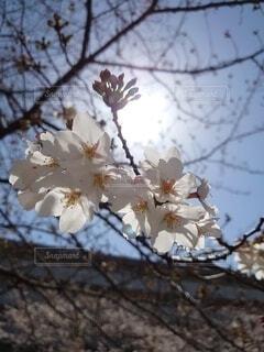花の写真・画像素材[4306185]