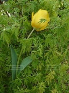 花の写真・画像素材[4317635]