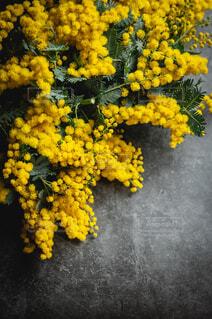 黄色い花のクローズアップの写真・画像素材[4069583]