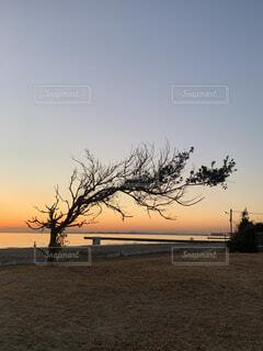 浜辺の木の写真・画像素材[4010439]