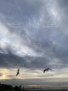 空,鳥,朝日,雲,飛ぶ,正月,お正月,日の出,群れ,新年,初日の出,くもり