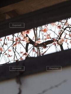 小さな春の景色の写真・画像素材[4166786]