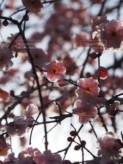 空を埋め尽くす春がくるの写真・画像素材[4166794]