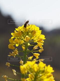 春前のミツバチの写真・画像素材[4166792]