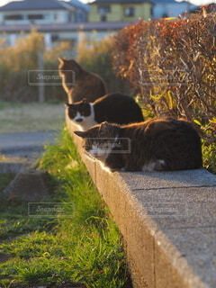 川沿いの猫達の写真・画像素材[4212758]