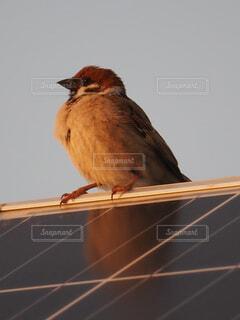 テラス休息所屋根にとまる雀の写真・画像素材[4253442]