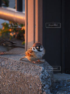 海岸の雀の写真・画像素材[4256460]