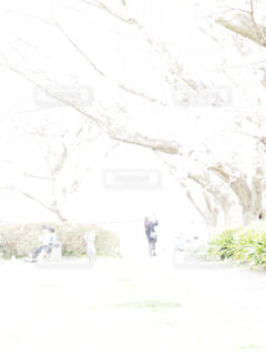 満開の桜と人達の写真・画像素材[4283506]