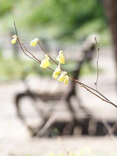 春の公園の写真・画像素材[4349210]